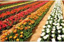 Flower bedecked, Kashmir looks to a tourist boom