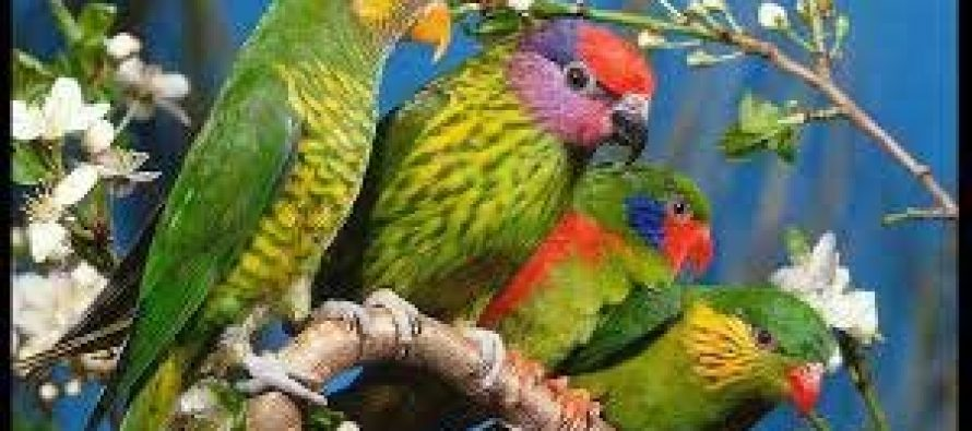 Agra to host first-ever international bird festival