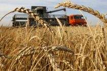 Record wheat procurement at 388.34 lakh tons