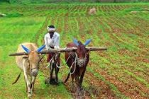 PM-Kisan scheme completes two years