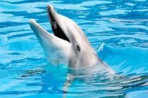 'More coal imports could end Goa's famous dolphin sighting tours'