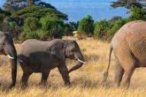 India, Bangladesh to set up working group on elephant conservation