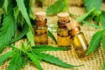 Peru approves medicinal use of marijuana