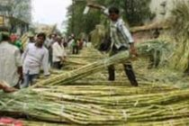 Cabinet approves soft loan to sugar mills to pay farmers' dues