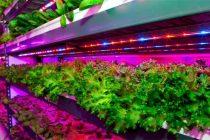 UAE's Emirates to build world's largest vertical farm in Dubai