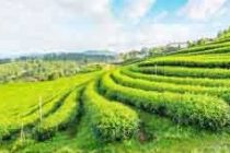 Sikkim to get '100 pc organic state' UN award in Rome