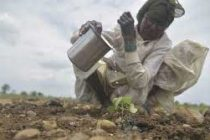 India emerges as leading seed hub in Asia: Study