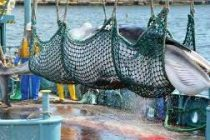 Japan to resume commercial whaling from July 2019