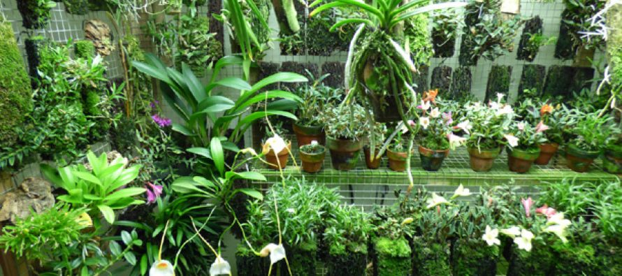 State of art Orchidarium to come up in Meghalaya