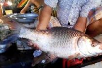 Bihar lifts ban on sale of live fish