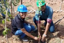 Mega tree plantation drive in UP likely on July 5