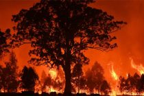 Aus bushfires smoke reaches Chile