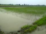 भूजल संरक्षण की परंपरागत विधि खेत पर मेड मेड पर पेड़ वर्षा बूंदे जहां गिरे वही रोकें : उमा शंकर पांडे  जल योद्धा