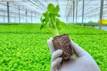 APEDA organizes orientation programme for start-ups for boosting agricultural products exports from Rajasthan