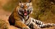 14 Indian tiger reserves get global accreditation