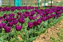 Interest in gardening surges among Australians amid lockdown