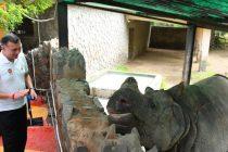 On World Rhino Day, IndianOil undertakes multiple initiatives to #SaveTheRhino