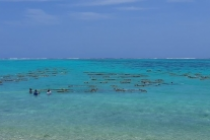 Seaweed farming will help boost economy, reduce climate impact
